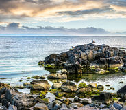 Sea landscape on the rocky coast. Calm sea landscape with some wave near rocky coast with boulders and seaweed  in early morning Stock Image