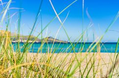 Sea landscape with sand beach and marram grass at coast stock images
