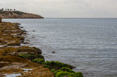 Sea landscape with stones and green moss Stock Images