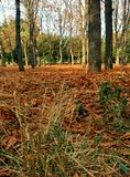 Forest landscape with  carpet of leaves. Carpet of fallen leaves in autumnal forest Stock Photography