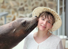 Sea leon kiss. Royalty Free Stock Photos