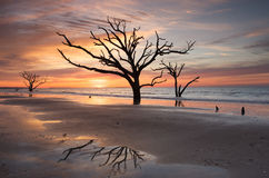 Charleston SC Botany Bay Sunrise Tree on Beach Stock Photos