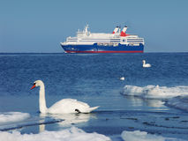 Sea life. Two swans, one seagull and the ship Stock Photos