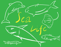 Sea Life Stock Image
