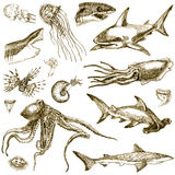 Sea life. Hand-drawn collection. Marine life - SEA MONSTERS and SHARKS. (Sepia haze Royalty Free Stock Photos