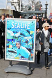 Sea Life Aquarium Stock Images