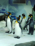 Sea Life Aquarium, Auckland, New Zealand. King penguins in Kelly Tarlton´s  Sea Life Aquarium. Auckland. New Zealand Stock Photos
