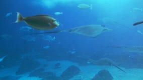 Sea Life Aquarium Stock Images