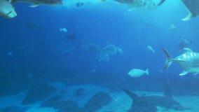 Sea Life Aquarium Stock Image