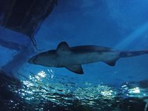 SEA LIFE Bangkok Ocean World royalty free stock image