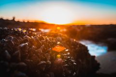 Sea life, barnacles, sea clamps. During colorful beautiful sunset in the beach stock images