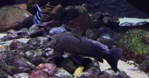 Sea Life in blue water. Underwater: Sea Life in deep blue water stock footage