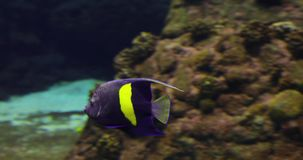 Sea Life in blue water. Underwater: Sea Life in deep blue water stock video