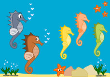 Sea life cartoon illustration with seahorses Stock Images