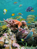 Sea-life colors. Sea-life in a coral reef with school of tropical fish and starfish Stock Photos