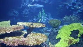 Sea Life. Cool beautiful sea life under water stock video footage