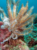 Sea Life in the Coral Reef Stock Images