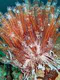 Sea Life in the Coral Reef Royalty Free Stock Photography