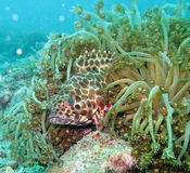 Sea Life in the Coral Reef Stock Photography