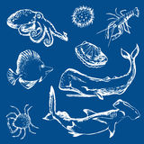 Sea life creatures. Shellfish, lobster, sperm whale, shark, porcupine fish, crab, octopus Stock Images