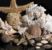 Sea life decoration Royalty Free Stock Images