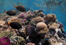 Sea life fish underwater landscape Royalty Free Stock Image