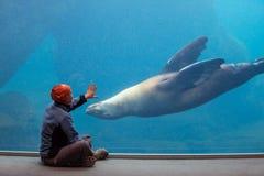 Sea life Royalty Free Stock Image