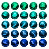 Sea life icon set. Twenty five glossy sea life icons or buttons Royalty Free Stock Photography