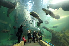 Sea life in Madrid. The exhibition of sea life in the biopark Faunia in Madrid, Spain Stock Photo