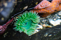 Sea life Stock Photos