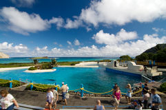 Free Sea Life Park Hawaii Stock Photography - 17476862