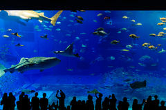 Sea life park in Okinawa. Silouette of people in Sea life park Stock Photography