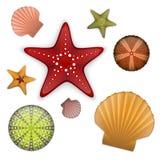 Sea life set. Starfishes, scallop shell, sea urchin Royalty Free Stock Photography