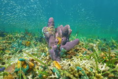 Sea life sponge with brittle stars and fish shoal Stock Images