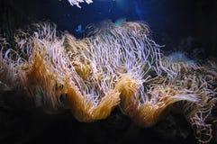 Sea life underwater, Algae stock photo