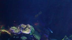 Sea life underwater stock video footage