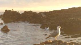 Sea life. Vila do conde rocks Stock Photography