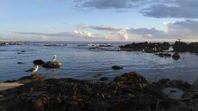 Sea life. Vila do conde rocks Royalty Free Stock Photos