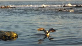 Sea life. Vila do conde rocks Stock Photos