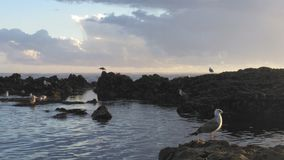 Sea life. Vila do conde rocks Royalty Free Stock Images