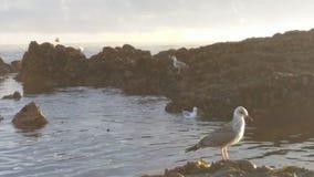 Sea life. Vila do conde rocks Stock Photo