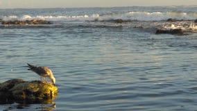 Sea life. Vila do conde rocks Stock Images