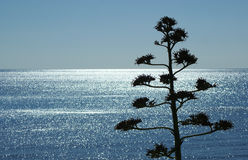 Sea of light with plant. In sardinia Royalty Free Stock Photos