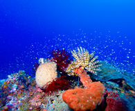 Sea Lilies on Colorful Tropical Reef Stock Photo