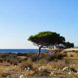 Sea lilies, pines, sea, on sunny day. Sea lilies, pines, sea and blue sky on sunlight stock photo