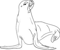 Sea-lion Stock Image