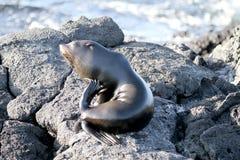 Sea Lion Stock Photo