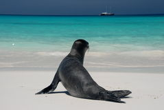 Free Sea Lion Stock Images - 4889534