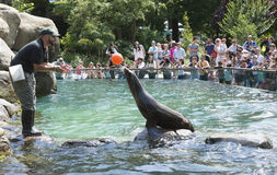 Sea Lion balancing a ball Central Park Zoo NYC Royalty Free Stock Photography