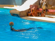 Sea Lion with a Ball Royalty Free Stock Photo
